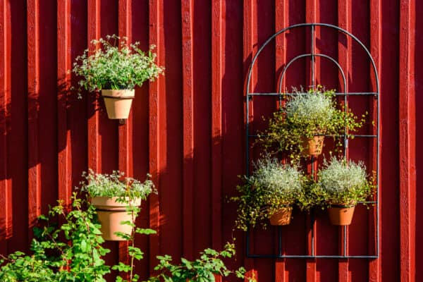 potted plant on a fence